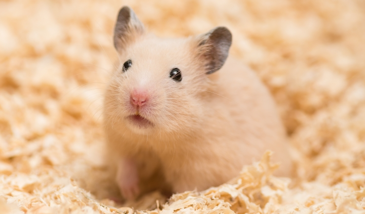 LICG Kids - Hamster