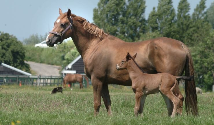 Kleurplaten Kijkdoos Paarden.Licg Kids Paard