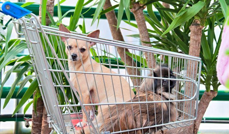 Een huisdier kopen